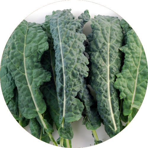 kale-improves-the-function-of-the-nervous-system
