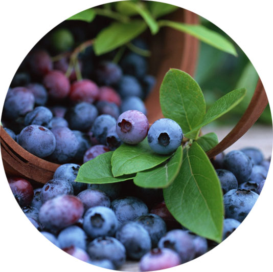 blueberries-good-for-prostrate-cancer