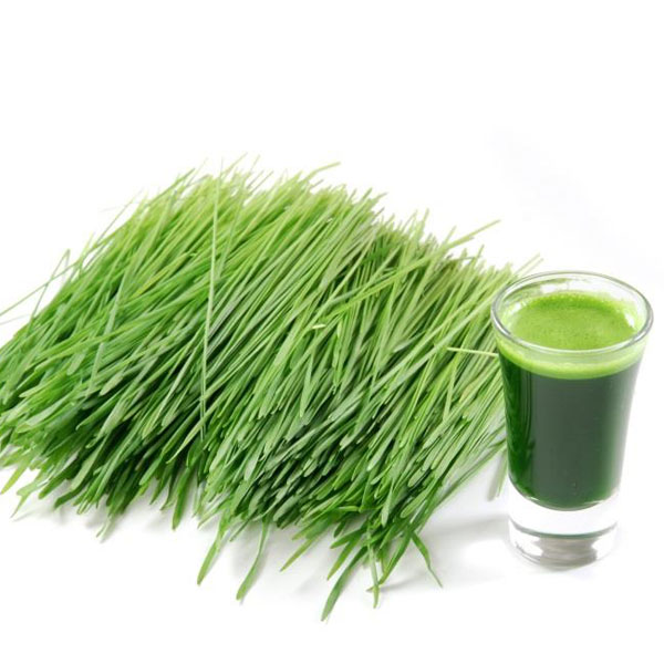wheatgrass-can-help-to-reduce-high-cholesterol-levels-and-risks-for-cardiovascular-disease