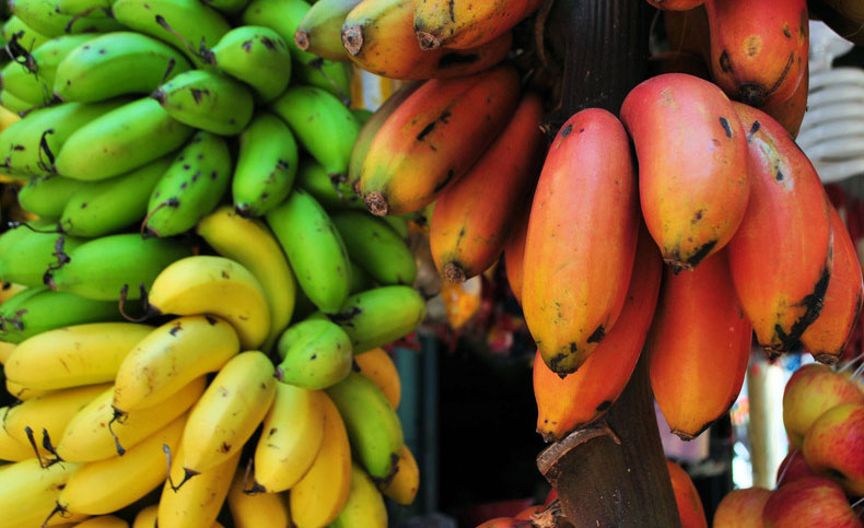 Bananas-For-Cancer,-Blood-Pressure,-Heart-Disease