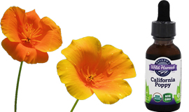 california-poppy-for-insomnia-and-relaxation